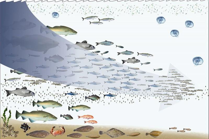 大海資源看似豐富,卻對抗不了人類口腹之欲。圖片來源:維基百科。