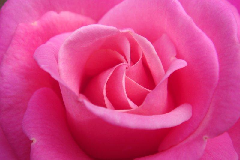 女人們的心中,總有個玫瑰色的夢(圖/Parvin@flickr)