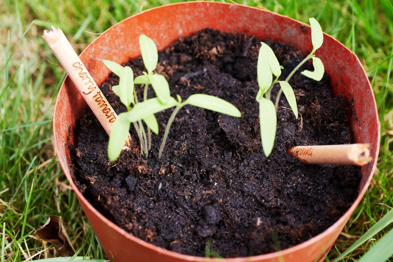 鉛筆撒在土裡可以種出一盆花?(圖/Sprout)