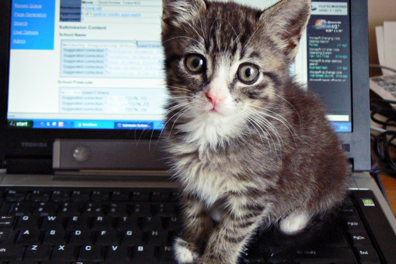 為什麼貓咪總喜歡躺在書桌上妨礙你工作呢?(圖/dougwoods@flickr)