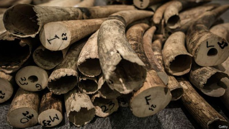 自1976年訂立國際條約以來,象牙貿易在全球範圍內被廣泛禁止。(BBC中文網)