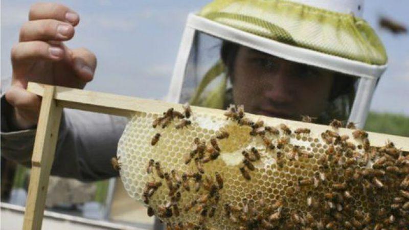 生態連損壞和生物多樣性銳減可能導致在三代人時間裏蜜蜂無法繼續授粉職能。