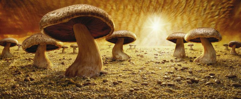 卡爾的第一件作品:蘑菇大草原(圖/Carl Warner - Official@facebook)
