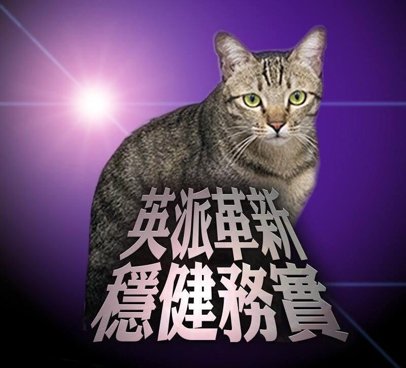 蔡英文臉書貼文談包容,卻以愛貓「蔡想想」當主角(蔡英文臉書)