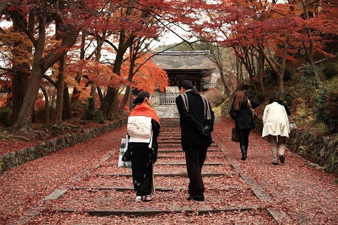 曾有旅人說,毘沙門堂最美的景色不是楓葉轉紅,而是當它開始散落一地時,遍地的奼紫嫣紅有如鋪上一層柔美地毯。(圖片來源:Flickr CC授權作者Seigo Sato)