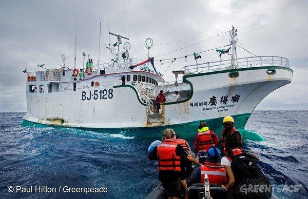 根據綠色和平的說法,他們是得到「順得慶888號」船長同意後登船搜證及觀察;不過,我國漁業署日前表示,綠色和平船隻未經中華民國政府同意,就藉機登上漁船檢查。(取自綠色和平組織網站)
