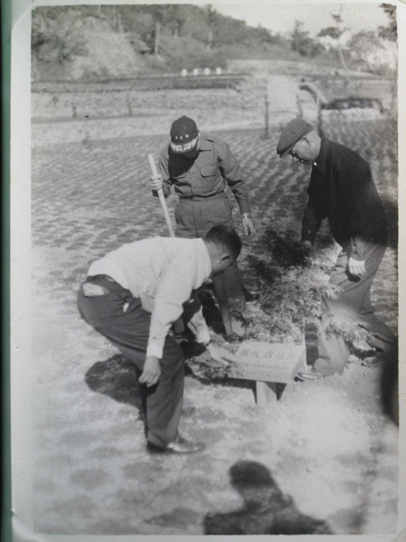 森保處是從這張時任國防部長的蔣經國(頭戴三星便帽)與右一身穿深色夾克的省主席黃杰,一起種植扁柏樹苗照片的後方小路的地形,與其他苗圃照片進行比對而找出當年種樹的位置。(森保處提供)