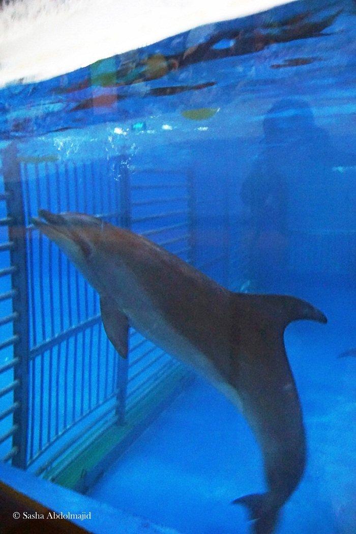 Sasha在北京拍攝的海豚館環境,海豚被困在狹小的空間內,僅足以牠們轉身。對於海豚而言,這顯然是一種虐待。(作者提供)