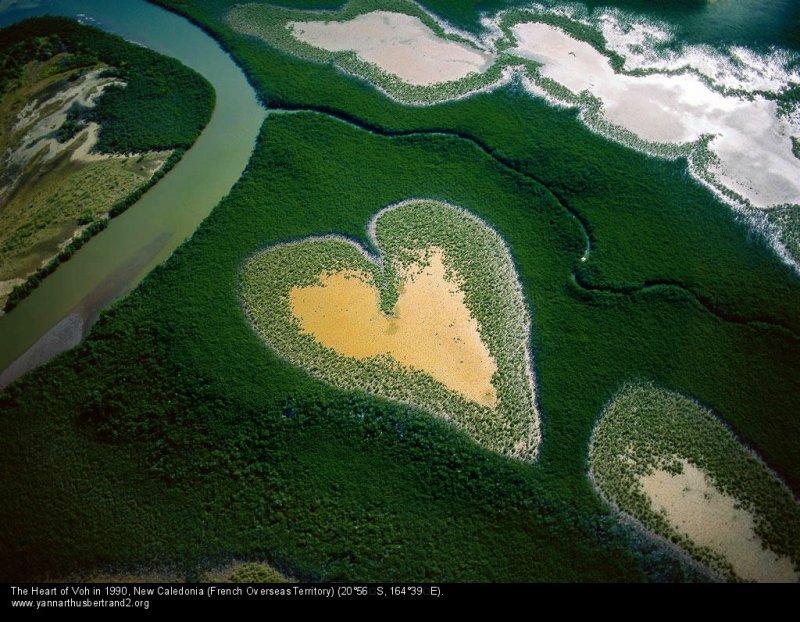 空中攝影師Yann Arthus Bertrand拍攝的紅樹林愛心 圖/ www.yannarthusbertrand2.org