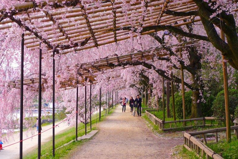 半木之道,是賀茂川沿岸最迷人的風景