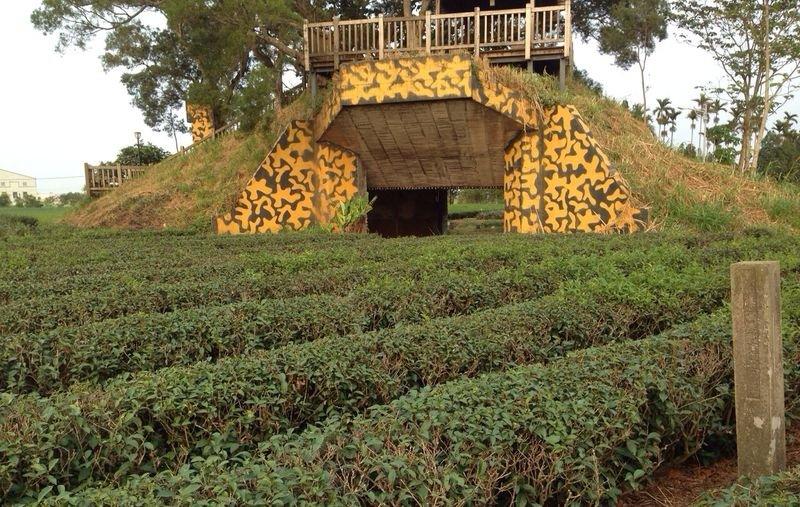 有機茶園(圖片來源:作者提供)
