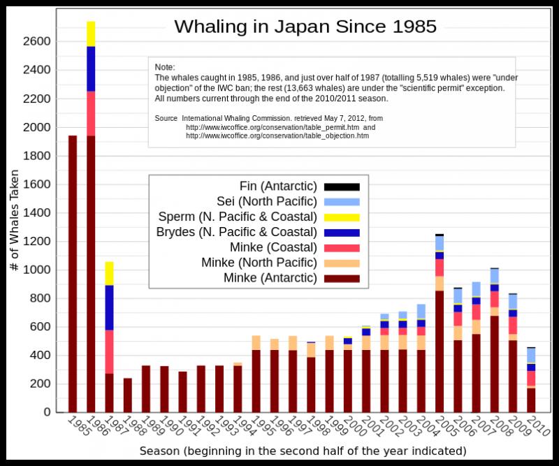 日本在1985年之後的捕鯨數量統計。