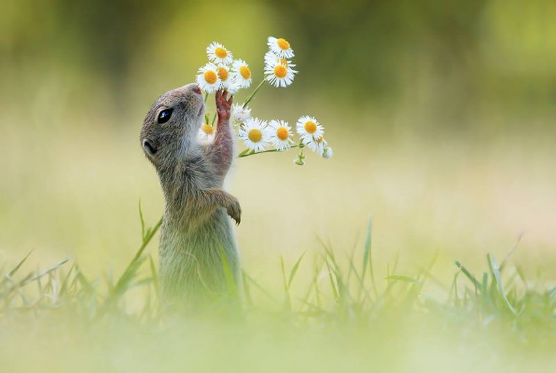 嗯花好香呀,摘一朵回家給女朋友吧!(圖/Julian Rad - Wildlife Photography@facebook)