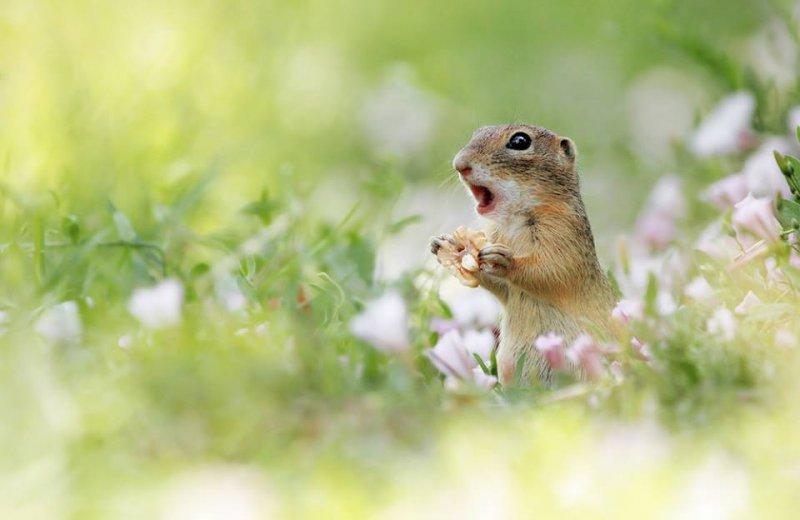 你是誰?怎麼會在我家門口?(圖/Julian Rad - Wildlife Photography@facebook)