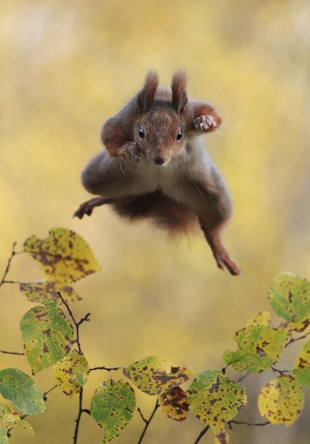 吃我一記松果!(圖/Julian Rad - Wildlife Photography@facebook)