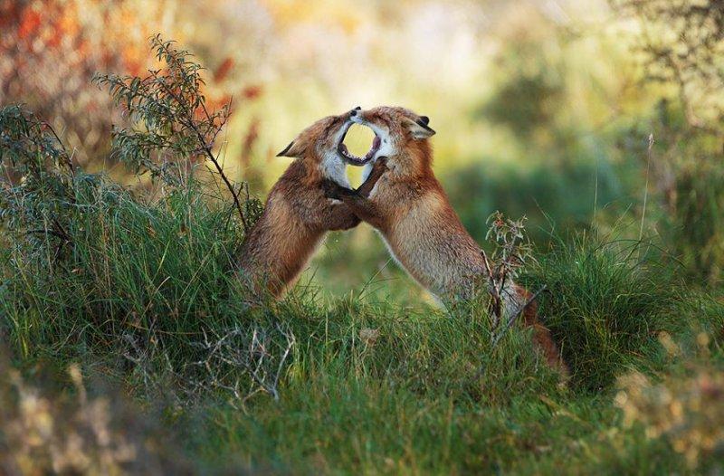 你覺得我們在做什麼呢?(圖/Julian Rad - Wildlife Photography@facebook)