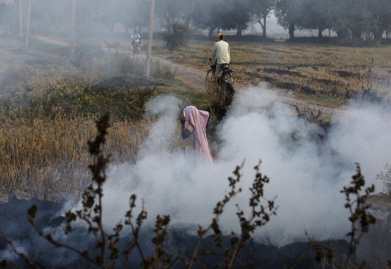 印度農夫以火燒方式處理稻荏(美聯社)