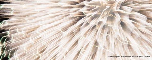 蜷川實花在長岡市拍攝的煙火作品。(翻攝現美新幹線官網)