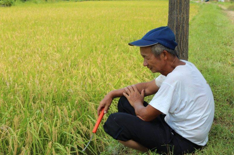 記者會上,灣寶女農洪箱表示,大家都說農民是「看天吃飯」,但是自己經過兩次、長達十多年的反徵收抗爭之後,反而覺得都是政府做的事在影響農民耕作。(取自台灣農民陣線網站)