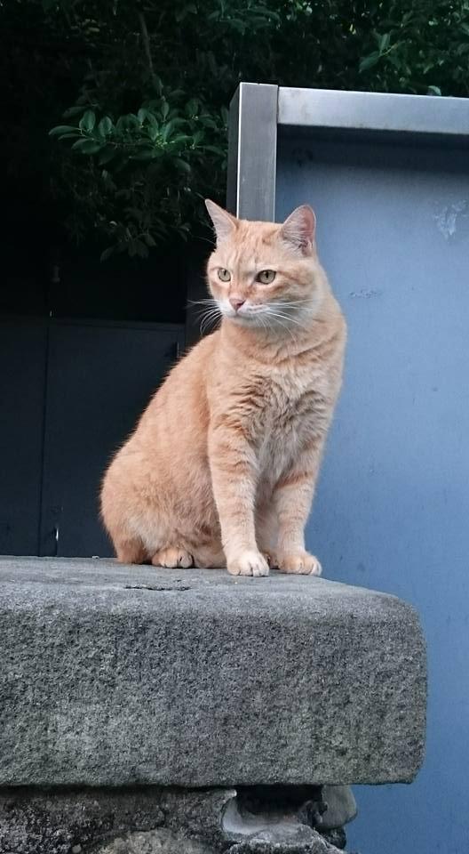 台北市溫州街流浪貓「大橘子」遭台大陳姓僑生虐待致死。(取自粉絲專頁)