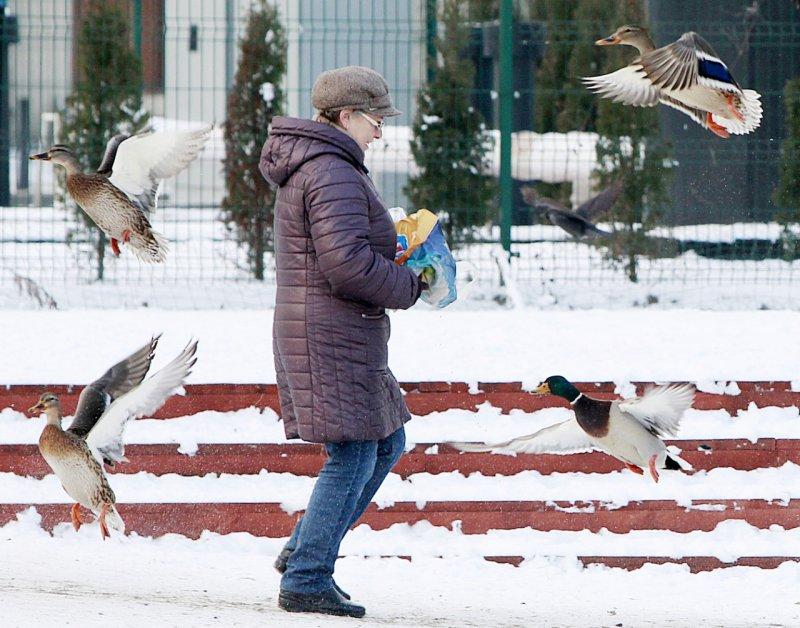 一名波蘭婦人在華沙市區的公園喂鴨子,四周都是昨晚尚未被剷除的積雪。(美聯社)