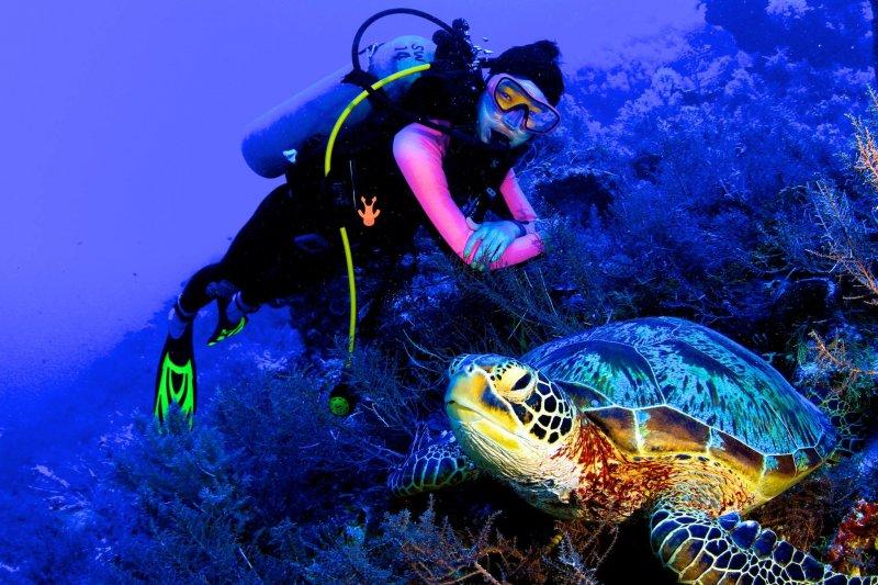 帛琉是海龜的樂園,浮潛時常可看見悠閒覓食的玳瑁。(圖/邱宏照臉書)