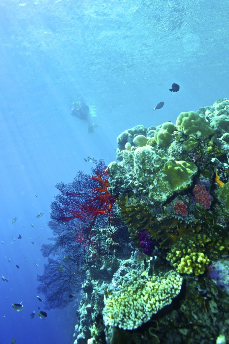 帛琉海水透光度高,陽光下的珊瑚呈現五顏六色的繽紛模樣。(圖/邱宏照臉書)