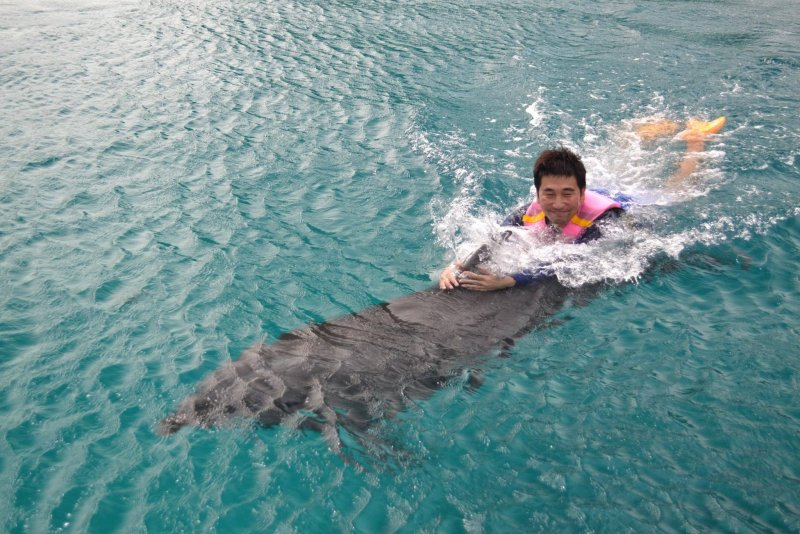 帛琉海洋不受破壞污染,魚群豐富,也吸引眾多鯨豚定居。(圖/邱宏照臉書)