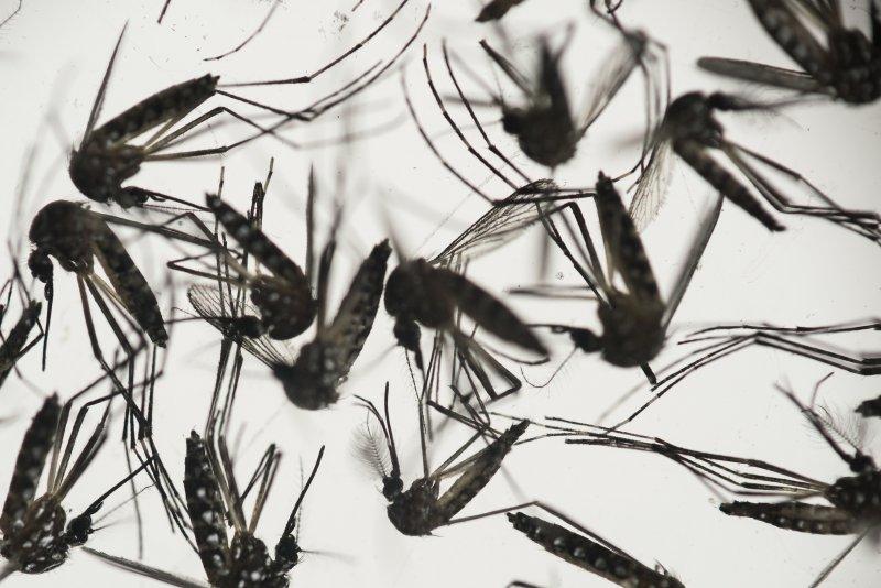 與登革熱病毒相同,茲卡病毒也是由埃及斑蚊傳播(美聯社)