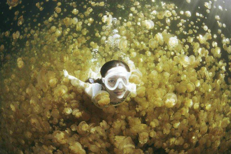 水母湖裡成千上萬的粉橘水母與潛客同游雖美,密集恐懼症者下水前得三思。(圖/邱宏照提供)