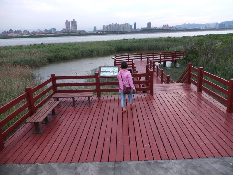 社子島堤防外即是生意盎然的天然溼地,與對岸的大樓遙遙相望。