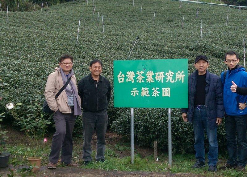 台灣南投縣霧社鄉的「合歡高山烏龍茶合作社」理事主席周凱律(圖左二)提2016年1月的這場瑞雪,讓霧社茶區裡的青心烏龍茶樹更加肥壯、油潤