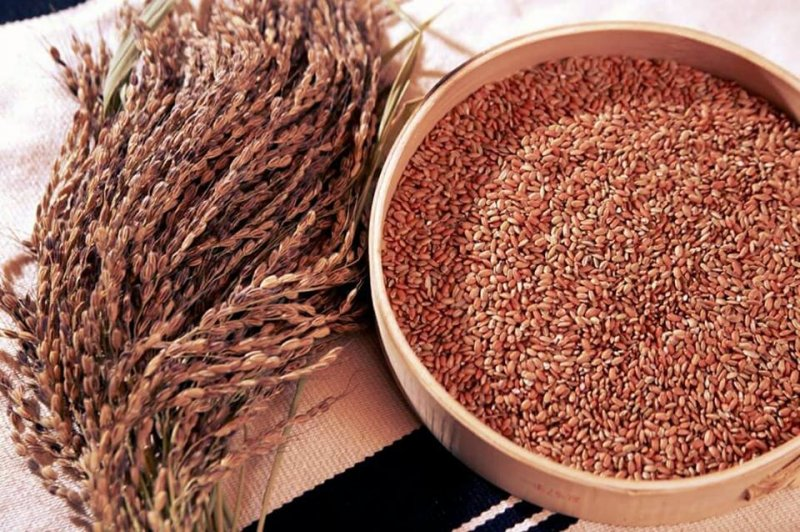 只有回到故鄉,才能種出銀珠香米的令人著迷的香氣