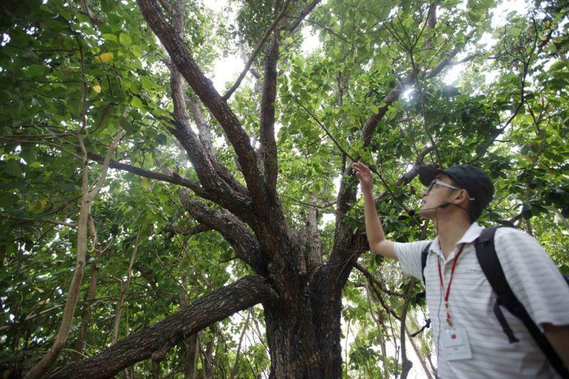 農委會植被專家陳建帆介紹包括蕨類在內的壯觀原生林。(取自外交部網站)
