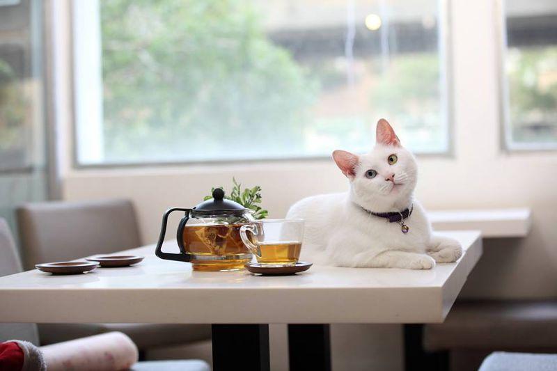 (圖/取自讀貓園-貓咪中途咖啡@Facebook)