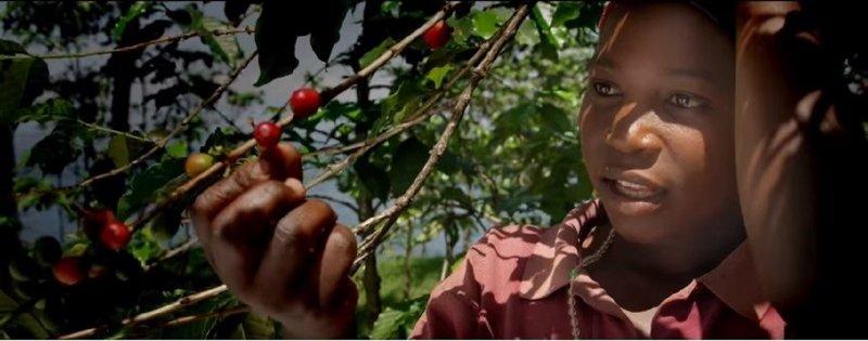 盧安達的農民們對每一株植物都全心照顧,並使用現代收成後立即採收的優質農作法,讓摘下的完美果實完善的被處理,讓盧安達所產的「精品咖啡」帶有獨特的花香與果香。(圖/擷取自Nespresso@Youtube)