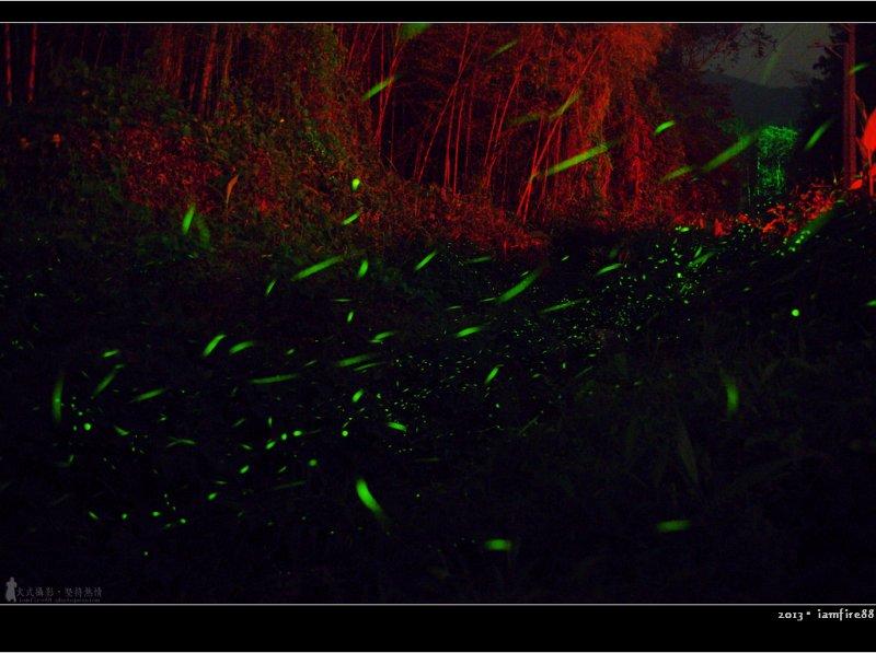 在螢火蟲生長的旺季,無數的綠色點點成了漫無邊際的螢火海。(圖/聖文 陳@Flickr)