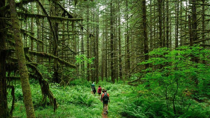 山林裡的智慧,將從腳踏著的每一分土地告訴你。(圖/Loren Kerns@flickr)