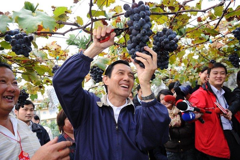 執政八年的「果實」,真的不像葡萄如此甘甜好摘。(2011年馬英九訪視清豐農場/總統府網站)