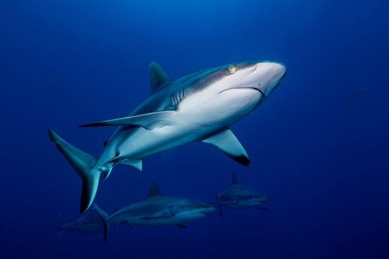 關心海洋,Yorko常在臉書發表禁吃魚翅或海洋保育等議題。(圖/Yorko Summer提供)