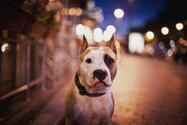 dog7.jpg