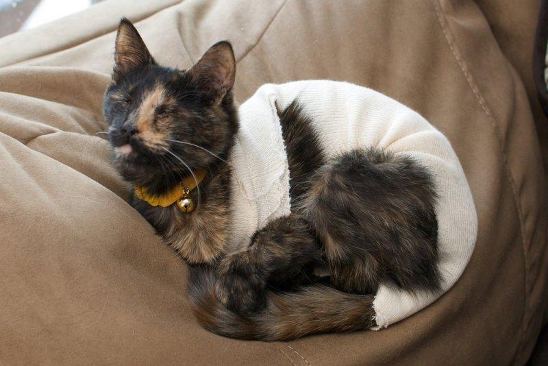 簡單幾個步驟,就可以為愛貓製作一件溫暖的新衣。(圖/Pete Markham@Flickr)