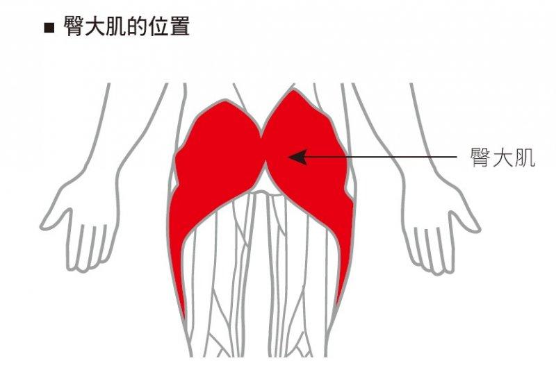 臀大肌的位置(圖/三采文化提供)