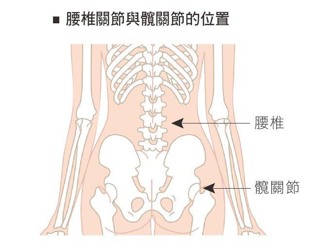 腰椎關節與髖關節的位置(圖/三采文化提供)