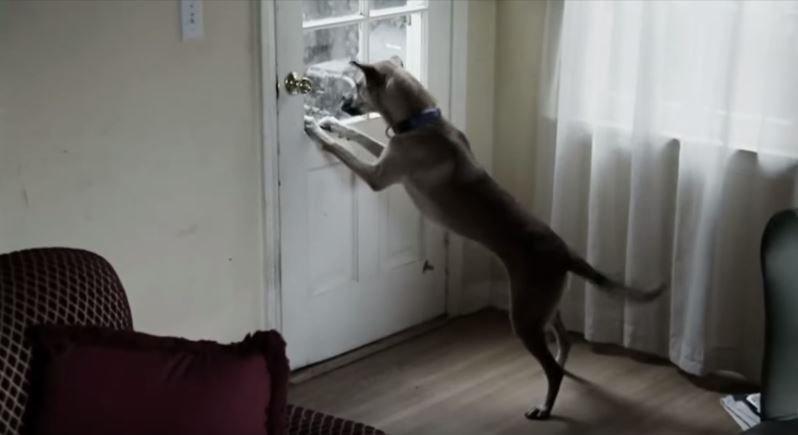 失去了主人,狗而不知道如何活下去。(圖/#Mind Warehouse@youtube)