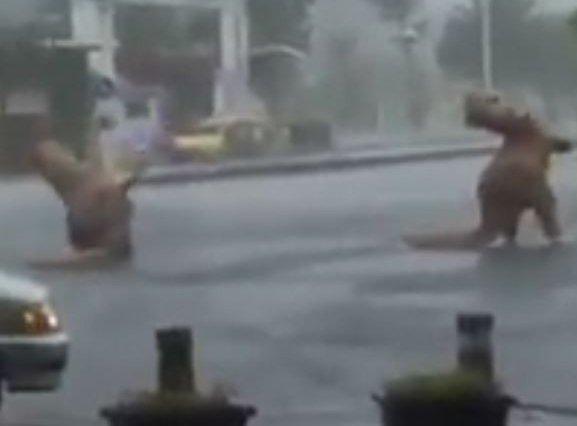尼伯特颱風恐龍。(取自爆料公社)