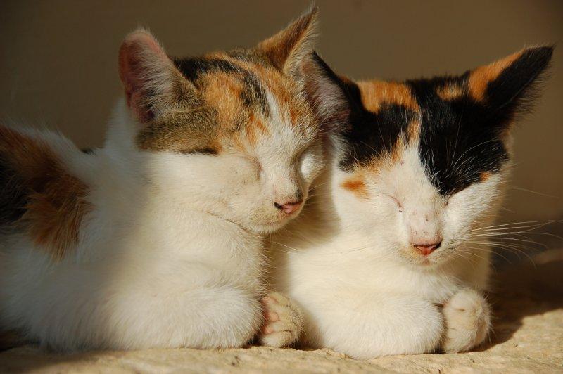 貓奴愈來愈多,如何讓貓兒健康生長也成為重要的課題。(圖/Krzysztof Belczyński@flickr)