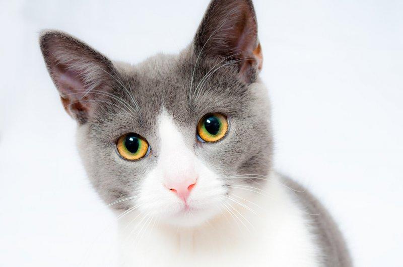 小貓.jpg