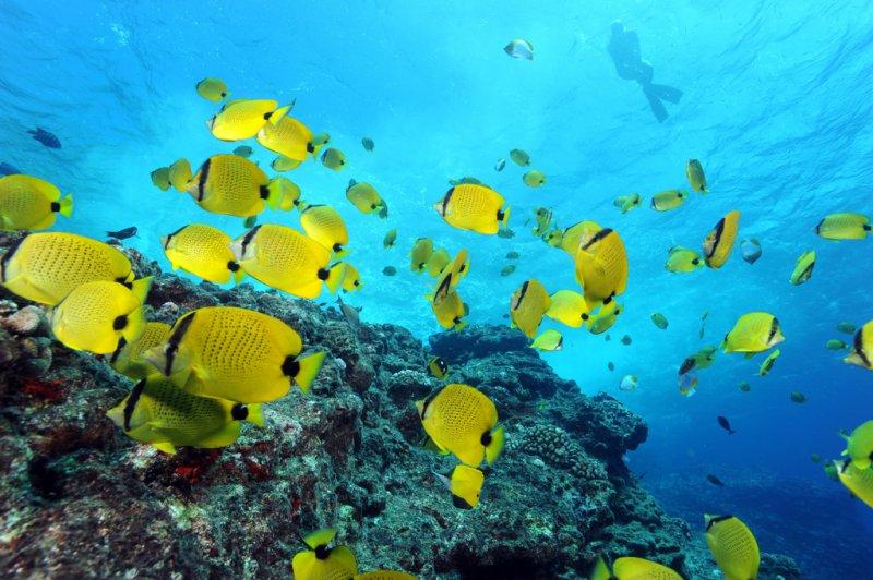 夏威夷帕帕哈瑙莫夸基亞海洋保護區,有多達7千種生物聚居於此。(Greg_McFall@NOAA's_National_Ocean_Service/Flickr)