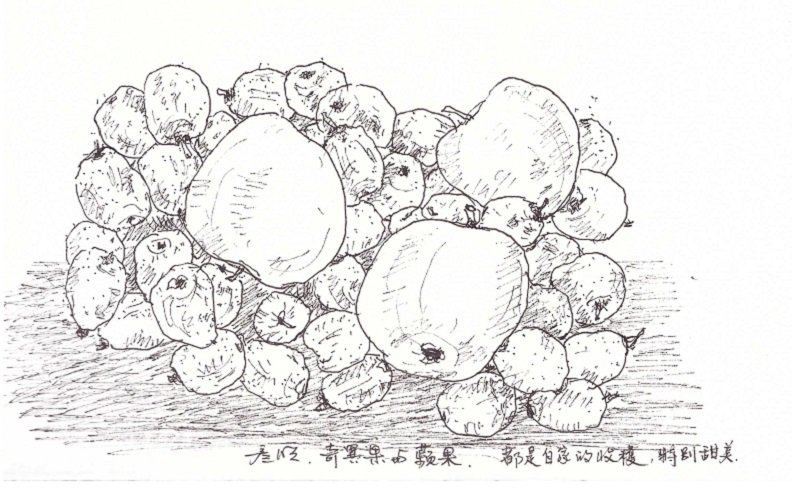 奇異果和蘋果都是自家栽培。(作者手繪/印刻文學提供)
